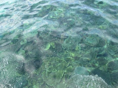 Terumbu karang